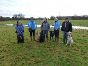 First Level 2 Assessment for 2014 . Held on 25th Jan 2014 , all 5 dogs gained Excellents with scores of 90 + and 99 the highest .